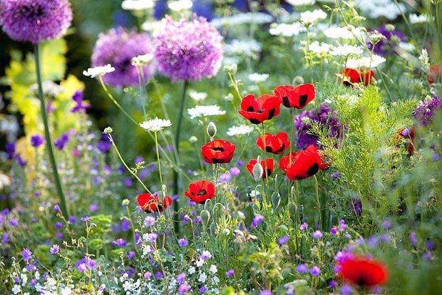 Rozkvetlá zahrada přináší radost lidem i včelkám