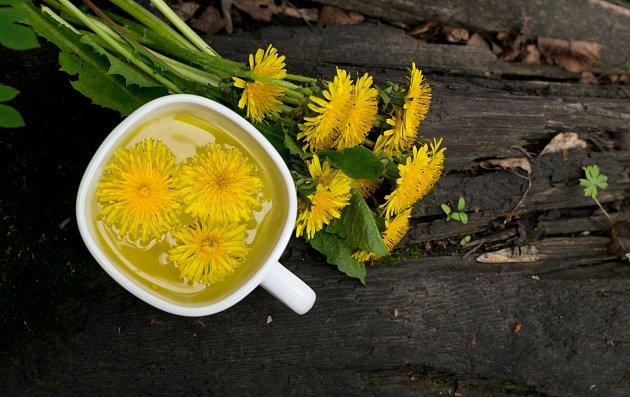 Pampeliška neboli smetánka lékařská je dokonalou rostlinou při detoxikaci