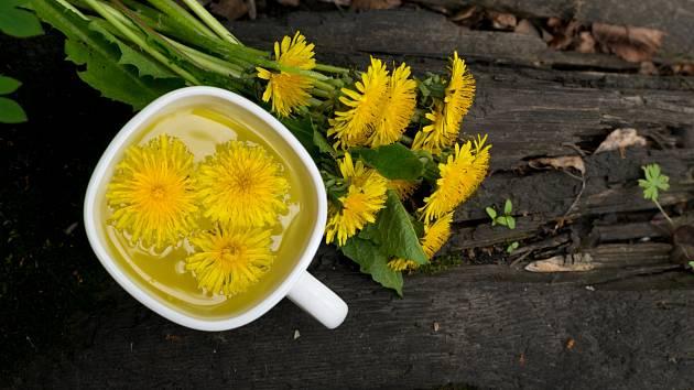 Pampeliška neboli smetánka lékařská je dokonalou rostlinou při detoxikaci - ať už ve formě čaje, nebo méně známé kávy.