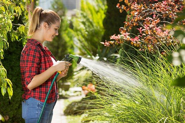 V červenci potřebují všechny rostliny na zahradě především pravidelnou zálivku. Důležité je ji i správně načasovat.