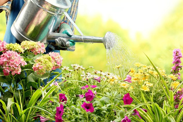 Místo hadicí zalévejte zahradu z konve