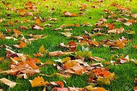 Důležité je průběžné odstraňování listí z trávníku.