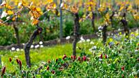 Druhově bohaté ozelenění vinice