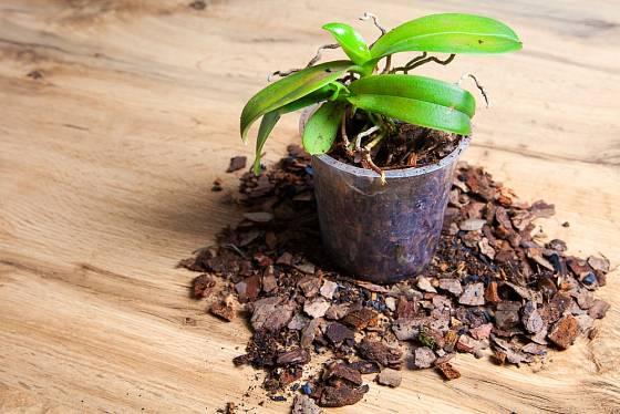 Průhledné květináče jsou pro orchideje vhodné