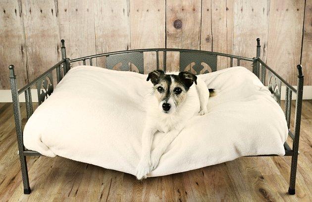 Psí pelíšky mohou mít také tvar klasické postele.