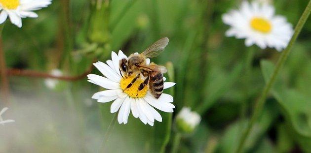 Potravu skýtají i včelám