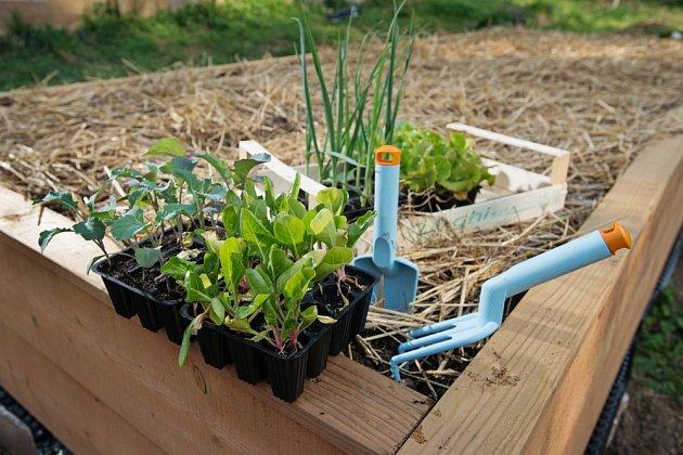 Mulčování svědčí půdě i rostlinám