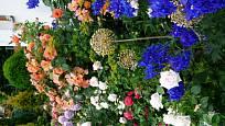 Pestrá paleta květů růží v kombinaci s modrou ostrožkou vytváří krásný obraz. Na pozadí vysoká voňavá růže Westerland, vedle ní v kontrastu mnohokvětá růže Novalis, kompozici doplňuje krémová Herzogin Christiana, Schloos Eutin a Madame Anisette. Třešničko