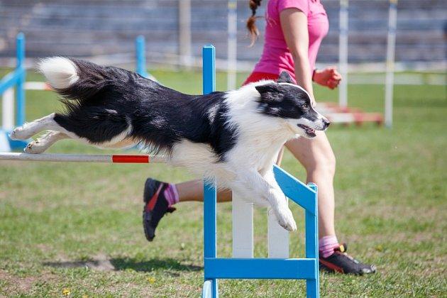 Tresty na hřiště nepatří – agility má být pro psa zábavou.