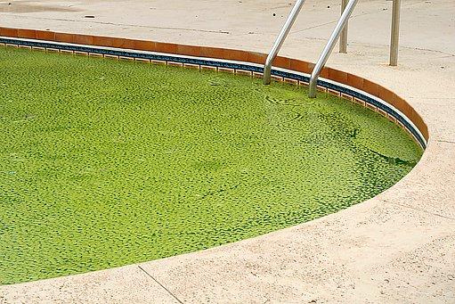 když se řasy v bazénu přemnoží, nikdo již nemá chuť se koupat