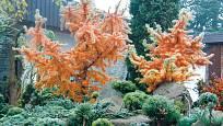 čarověníky - v pozadí bizardní modříny v podzimním hávu
