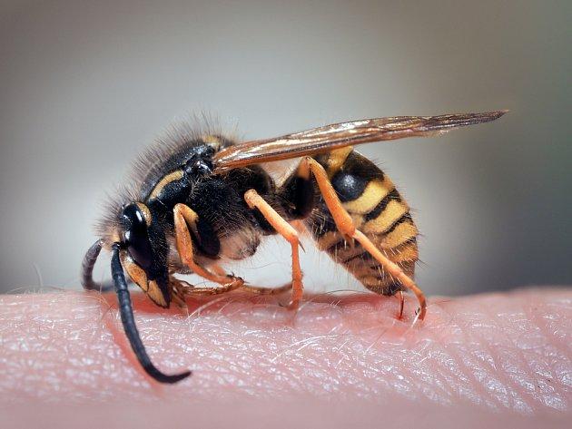 Poštípání hmyzem dokáže potrápit