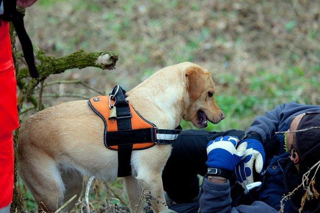 Mantrailing je metoda výcviku, kdy pes sleduje, stejně jako u ostatních stopovacích metod, pachovou stopu pouze jediné osoby