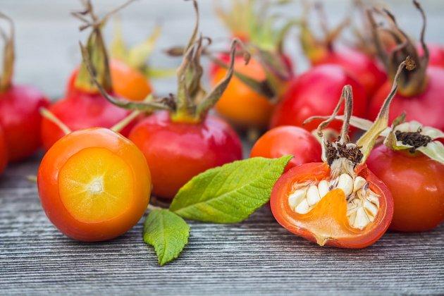 Vydlabat semínka nestačí, potřebují stratifikaci