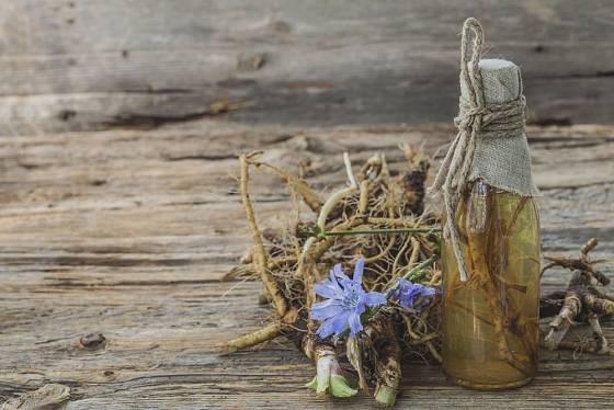 Kořen čekanky má na trávení a celé tělo blahodárné účinky