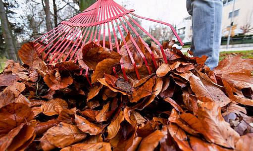 přikrytí rostlin listím