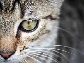 Kočka patří k oblíbeným domácím mazlíčkům.