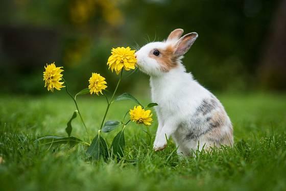 Králíčci objevují zahradu, zaujme je i kvetoucí janeba. Tato trvalka jim neublíží