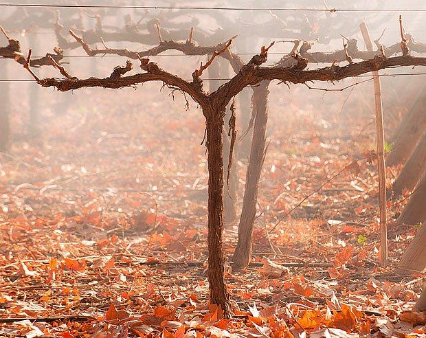 Vinice se připravuje na zimu
