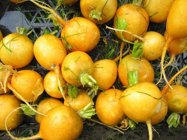 Upravené rostliny odrůdy Helios před výsadbou, nať je zkrácená asi na 2-3 cm