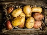 Na způsobu skladování závisí trvanlivost brambor