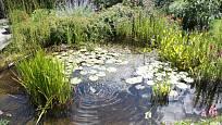 Dešťová zahrada je praktická a zároveň okrasná.