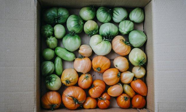 Rajčata dozrají v kartonové krabici