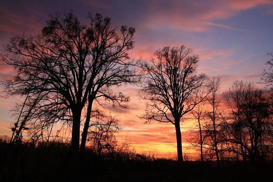 Duby jsou nádherné po celý rok - zimní siluety dubu letního