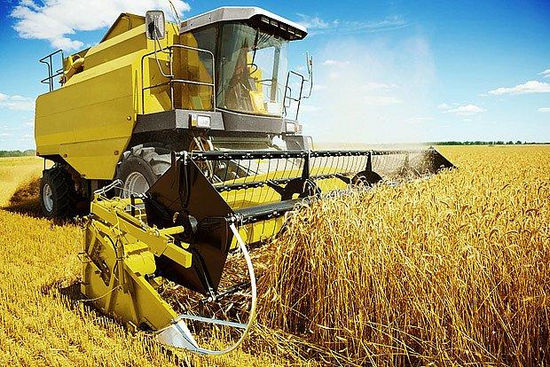 Dnešní sklizeň pšenice vyžaduje pouze velmi málo přímé lidské práce