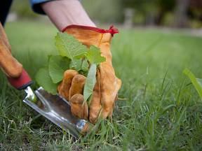 Zbavit zahradu plevele vyžaduje často velkou dávku trpělivosti