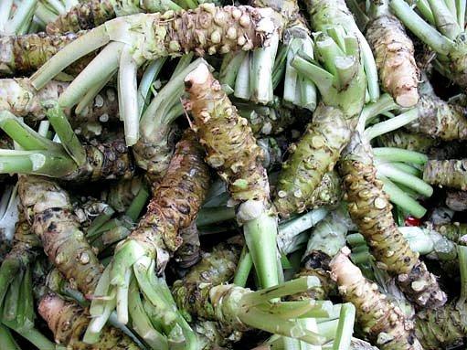 Křen wasabi