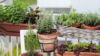 Rostliny na balkóně umístěte do více pater