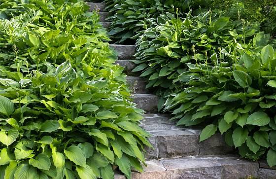 Hosty se často používají v lemech chodníků či schodišť.
