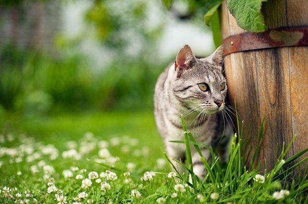 Kočka má políčeno na ptáky