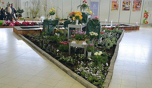 Narcis 2012