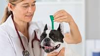 Pipetu proti klíšťatům obvykle aplikuje veterinář