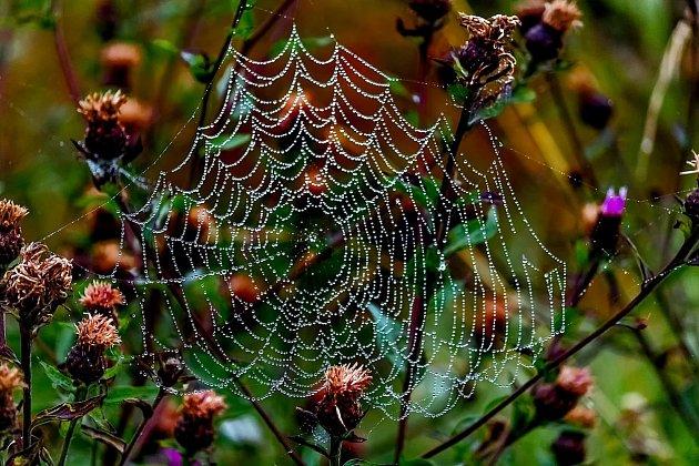 Pavučiny doma rádi nemáme, přitom jsou to někdy hotové umělecké objekty