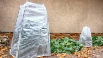 Kryt z netkané textilie ochrání rostliny před mrazem a větrem