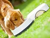 Pes - ilustrační snímek.