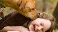 Psi nám dokazují denně svou bezpodmínečnou lásku a oddanost.