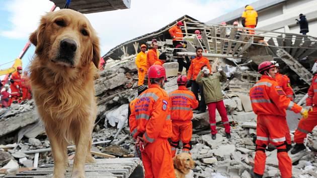Psi silně vnímají i přicházející živelné katastrofy jako zemětřesení.