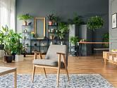 POkojové rostliny mají kouzlo dotvářet atmosféru našeho domova