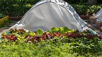 Textilii můžete položit přímo na rostliny, nebo jí potáhnout jednoduchou konstrukci