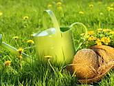 klasický trávník je na udržování jednodušší než ten anglický