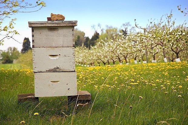 Ovocný sad a včellí úl, ideální sousedství