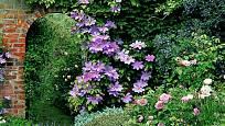 Listy vistárie a fialové květy plaménku