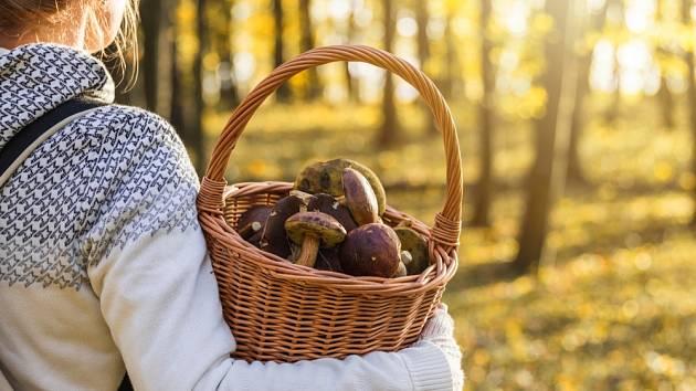 Vysočina potvrzuje, že je rájem houbařů.