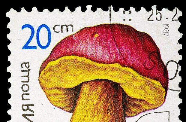 V Bulharsku má hřib královský i svou vlastní poštovní známku
