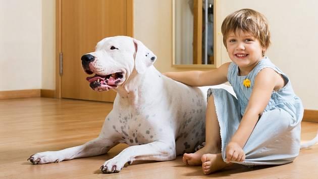 Argentinská doga dokáže být skvělým parťákem vašich dětí.
