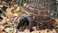 Spadané listí je úkrytem pro mnoho užitečných živočichů, ježci ocení i speciální příbytek